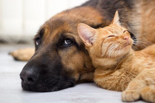 Argentina, o país com maior número de animais de estimação por habitante