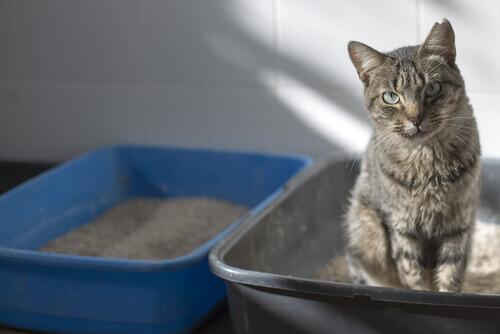 4 passos para o bom uso da bandeja higiênica dos gatos
