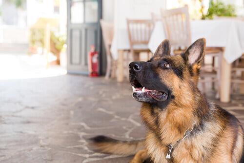 hotel para cães