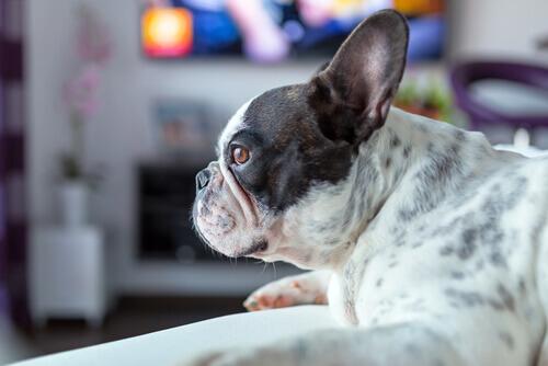 cão-não-gosta-de-filme-de-terror