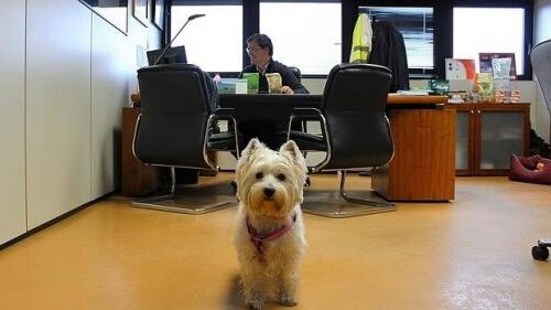 cão no escritório
