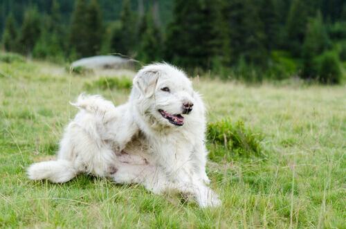 Conheça os parasitas mais comuns em cães