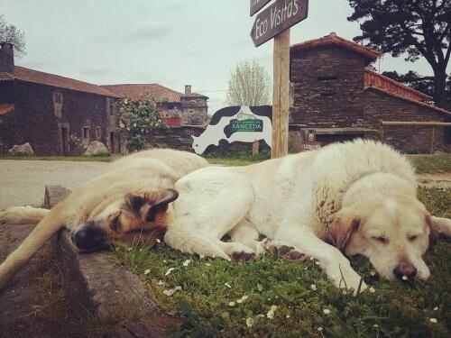 campanha de adoção de cães