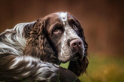 Como parar com os soluços de seu cão