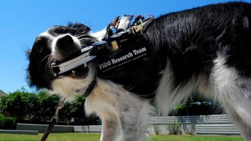 Um colete que permite a comunicação dos cães com os humanos