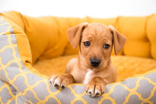 comprar-um-cão