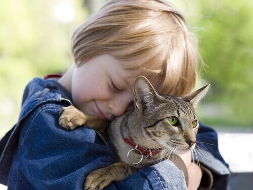 5 lições que as crianças podem aprender com gatos