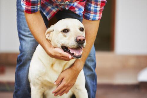 epilepsia nos cães