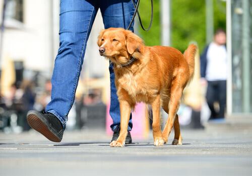 Como evitar que meu cão queime as patas no verão?