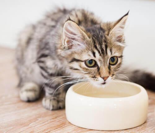 gato move o prato