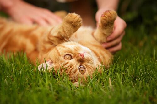 Gatos também podem ser amigos fiéis