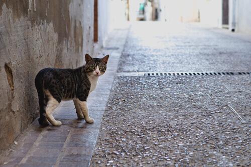 Estudos demonstram que os gatos se perdem mais que os cães