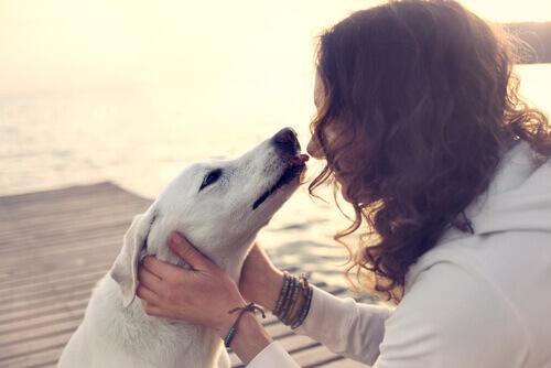 beijar um cão