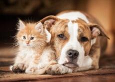 insolação em cães e gatos