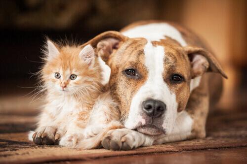 Como prevenir a insolação em cães e gatos?