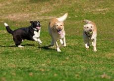levar o seu cão ao parque