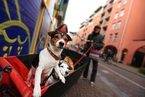 na-holanda-não-ha-cães-de-rua