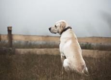 os cães abandonados