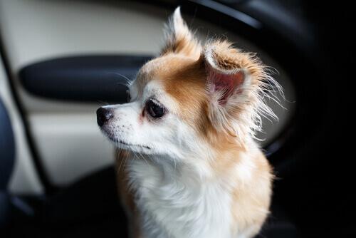 Um homem quebra as janelas de um BMW para salvar a vida de um cão