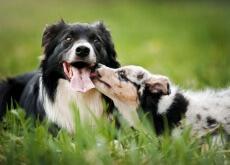 socializar-o-seu-cão