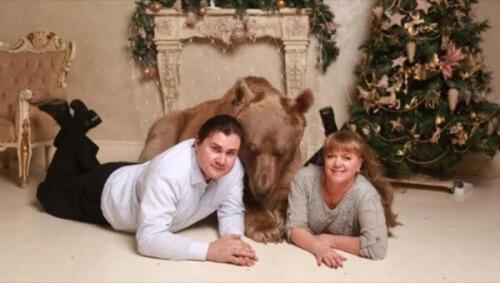 Stepan, o urso que se tornou o animal de estimação de um casal russo