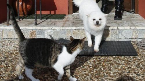 um-cão-e-dois-gatos-salvam-a-vida-de-uma-familia-e1456188647631
