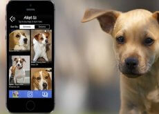 guau-que-perros-app-que-fomenta-a-adocao-de-animais-de-estimacao