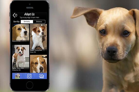 """""""Guau! Qué perros"""", o novo aplicativo que estimula a adoção"""
