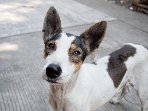 Uma campanha emocional para adotar cães abandonados
