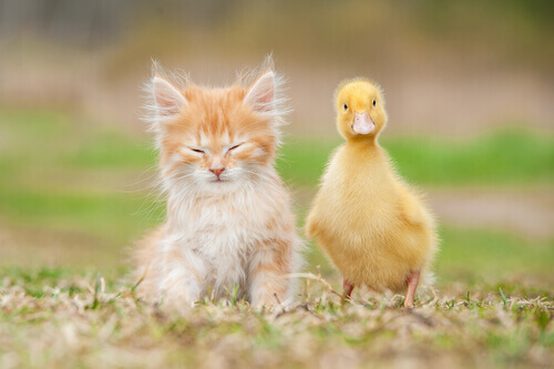 Quais animais podem ser de estimação e quais não