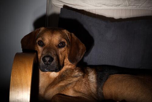 Os cães assistem televisão?