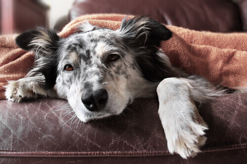 10 passos para combater a diarreia nos cachorros