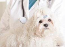 cao_no_veterinario