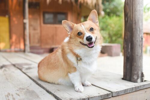Conheça o estado de humor de seu cão segundo sua postura