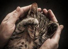 filhote_gato_entre_as_maos