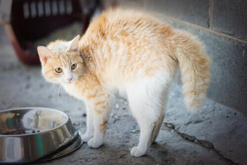 5 causas de fobia nos gatos