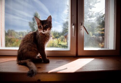 Tornando a casa mais segura para o seu gato