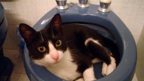 Muki: o gato que usou suas 7 vidas