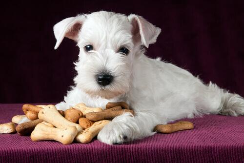 Lanches saudáveis para o seu cachorro