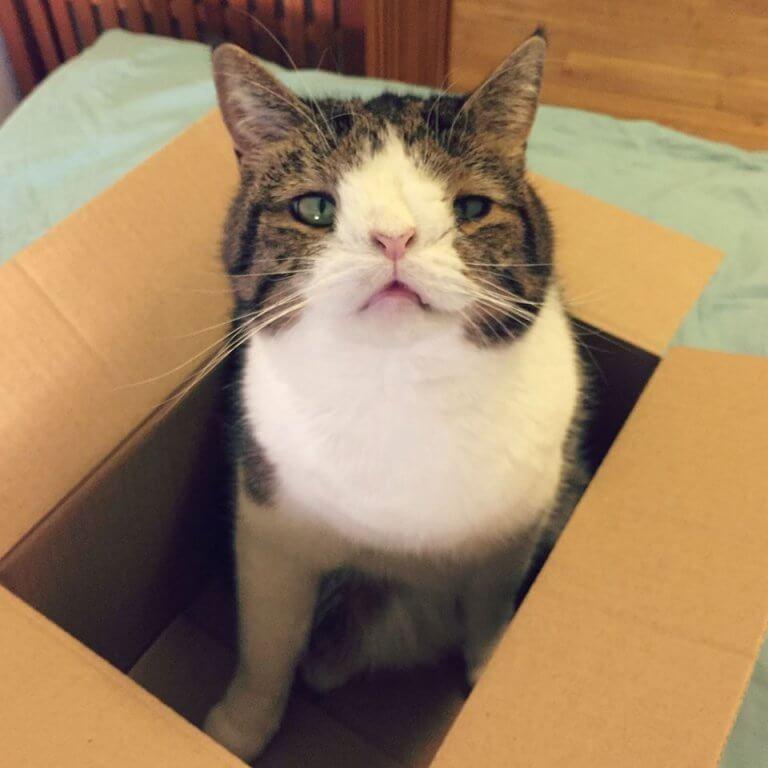 monty-um-gato-com-sindrome-de-down-3