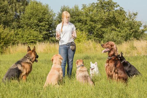 Você já conhece os cuidadores online de cães?