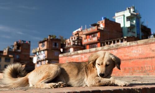 De que forma a poluição prejudica os cães?