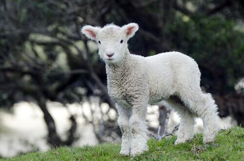 Roupas veganas, tecidos que garantem o bem-estar dos animais