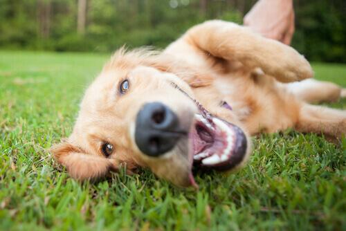 Parasitas internos: um perigo para a saúde canina