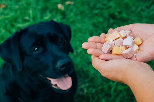 pessoa-dá-comida-ao-cão