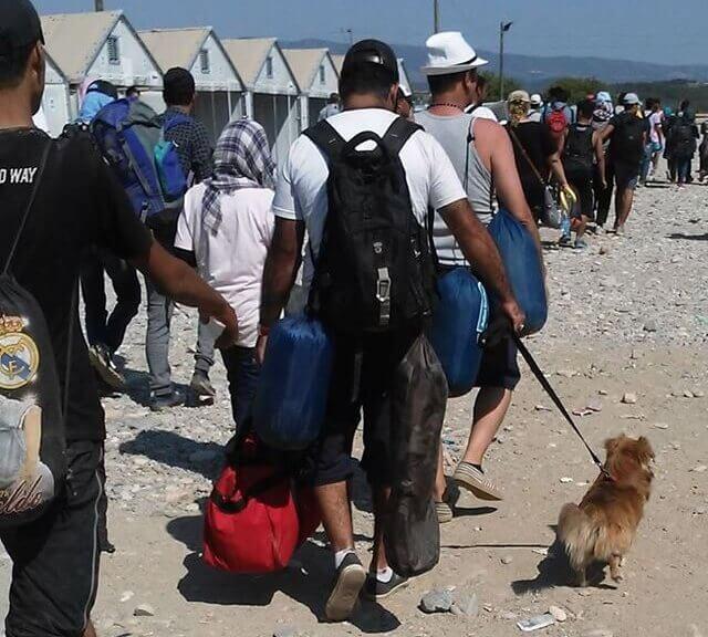 refugiados-sirios-com-seus-pets-2