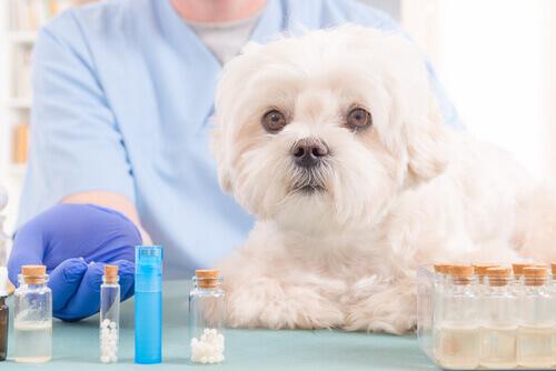 5 óleos naturais que devem estar no estojo de primeiros socorros de seu cão