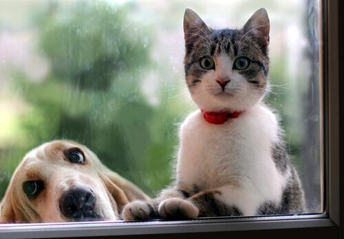 Cão ou gato
