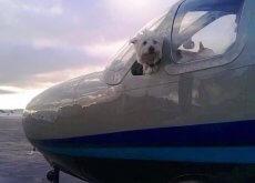 wings-of-rescue-salvam-caes-e1471230914215