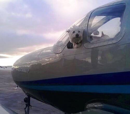 Conheça o Wings of Rescue, os pilotos voluntários que salvam a vida de cães